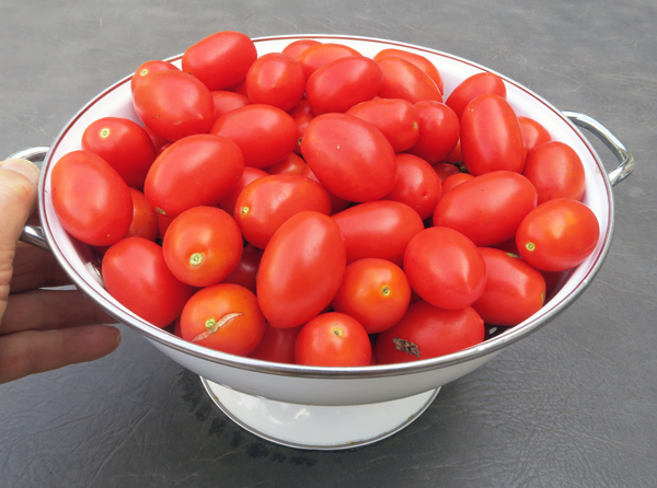Juliet tomatoes