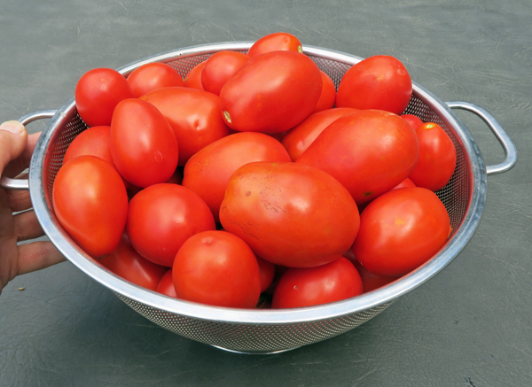 assortment of paste tomatoes