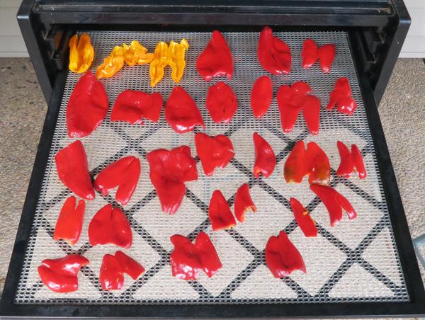 dehydrating peppers for gochugaru