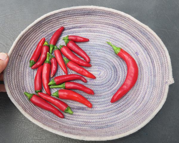 Gochugaru and Kimchi peppers