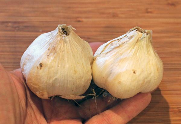 K's Backyard garlic