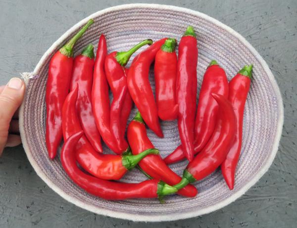 Minero peppers