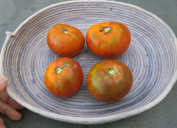 mini beefsteak tomatoes