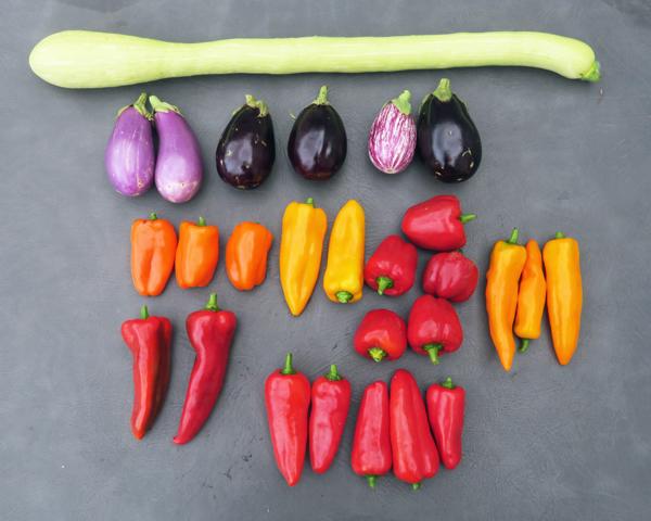 sweet peppers, eggplant and tromboncino