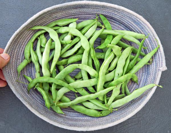 Robe Mountain beans