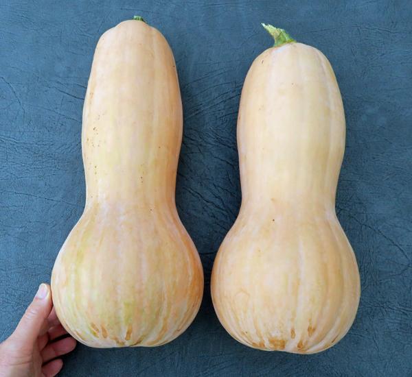 Turkeyneck squash
