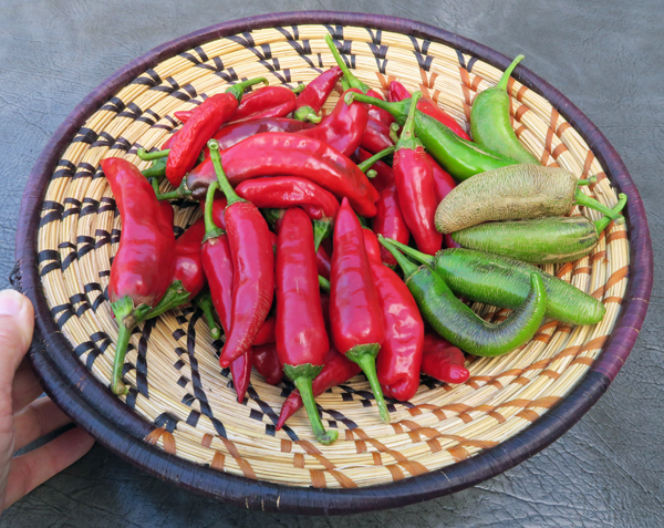 sweet paprika and jalapeno peppers