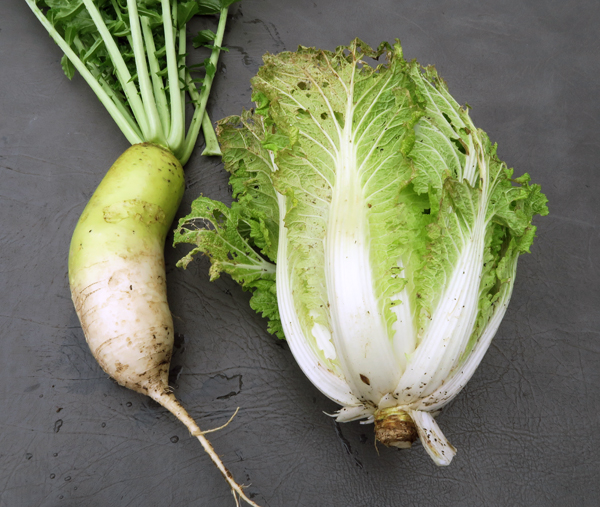 Alpine radish and Soloist cabbage