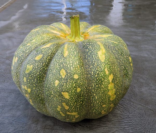 Rancho Marques winter squash