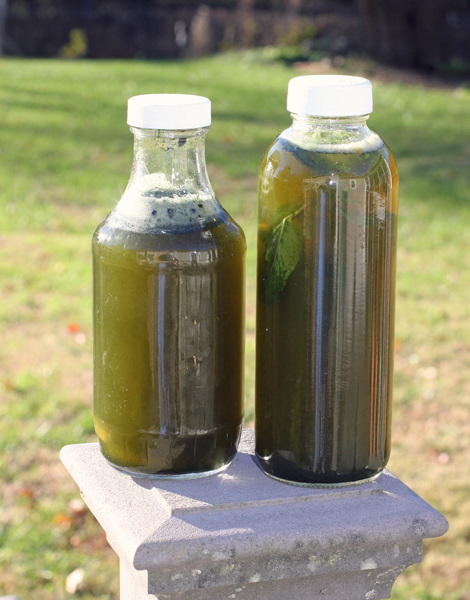 green kombuchas