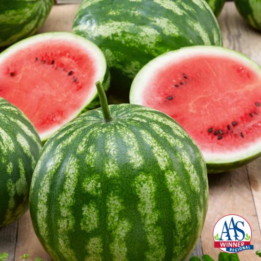 Watermelon Bush Cal Sweet