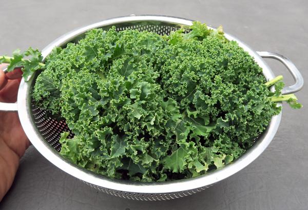 Darkibor kale