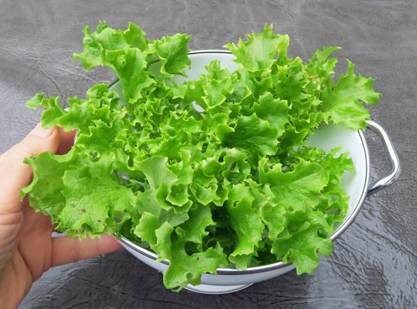 Tango lettuce