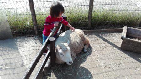 マザー牧場 ふれあい動物