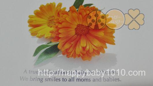 ベビースマイル シースター カレンデュラ 赤ちゃん用保湿