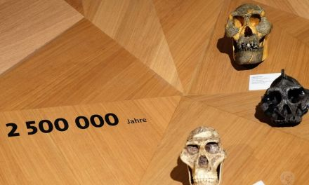 Ausflugsziele NRW: Neanderthal Museum (Mettmann)