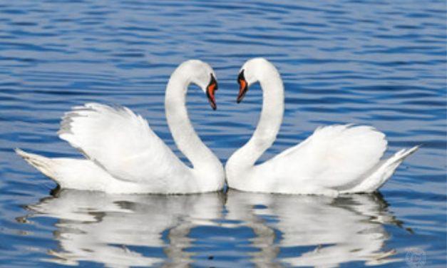 Valentinstag — Ein Liebesbeweis nach Kalender?