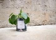 Cadeau Green pour Noël : offrir une Plante dépolluante personnalisée !