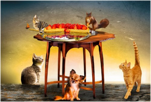 Animal Birthday Cake Wallpaper Photo Pictures Pics for download free