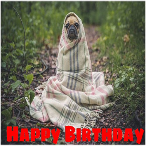 Funny happy birthday images for her free hd download whatsapp facebook share