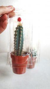 verzenden en verpakken Happy Cactus