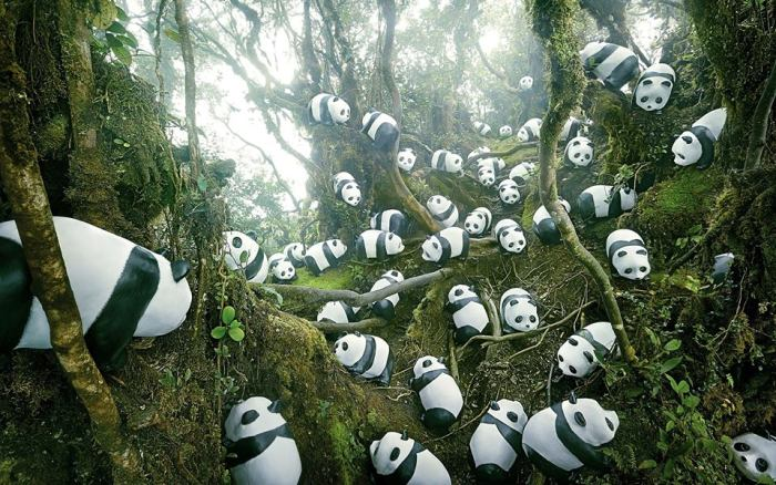 1600 Pandas in Mosh Forest of Cameron Highlands. Picture credit to 1600 Panda MY