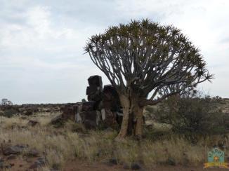 Namibia Bucket List (9)