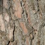 bark-199430_1920