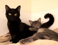 Nashira & Capella @ Happy Cats