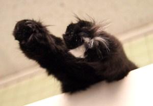 Merlot's Toes @ Happy Cats