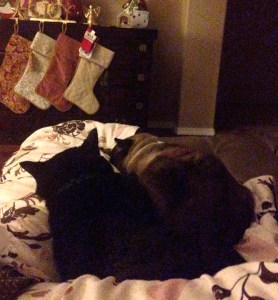 Luke & Kenzo at home for Christmas