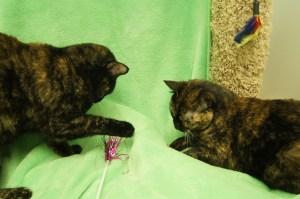 Bee & Rumer @ Happy Cats