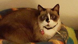 Loki (FKA Margret) at Happy Cats