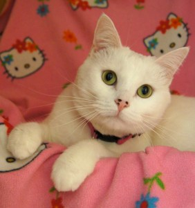 Cleo @ Happy Cats