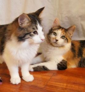 Tiny Tim & Mercy @ Happy Cats