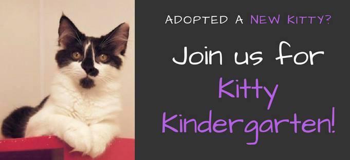 Kitten Kindergarten – Do's & Dont's