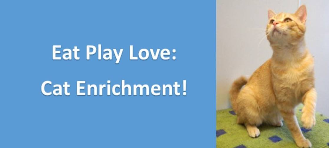 Eat, Play, Love: Guidelines for basic cat care & enrichment!