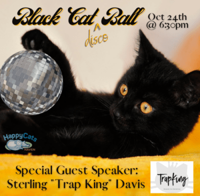 black cat ball virtual fundraiser cat with disco ball