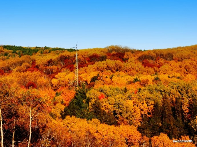 The observation tower at Deep Portage Learning Center is a great place to spot some fall colors!
