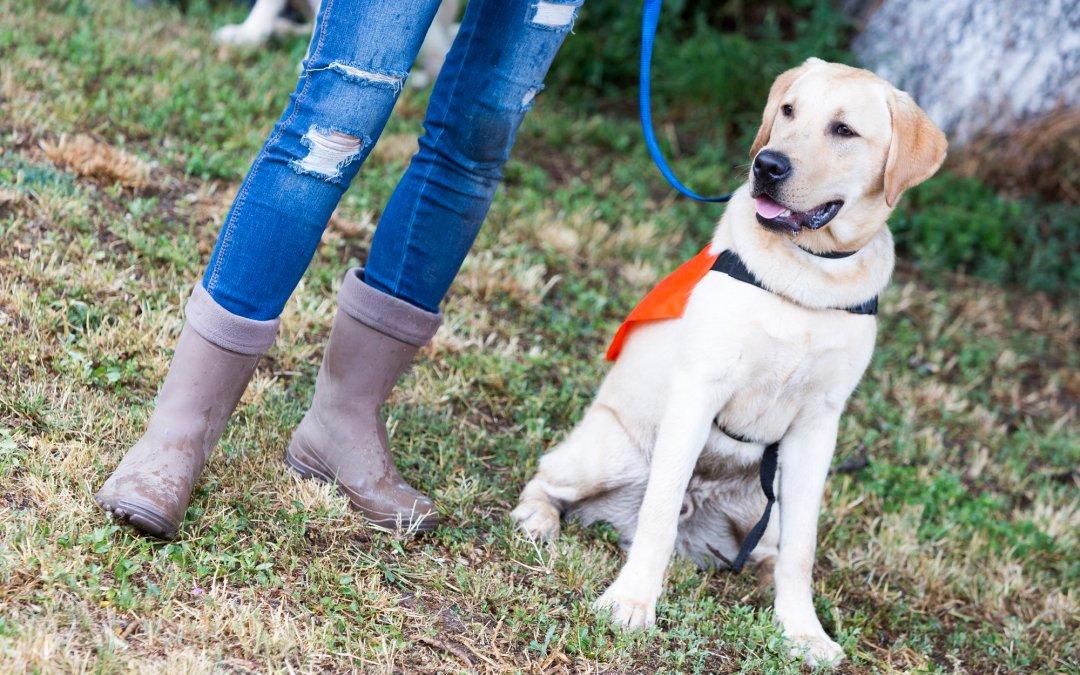 National Pet Obesity Awareness Day – October 14, 2020