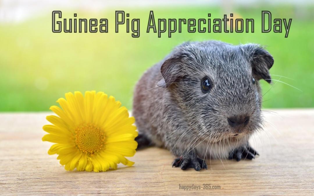 Guinea Pig Appreciation Day