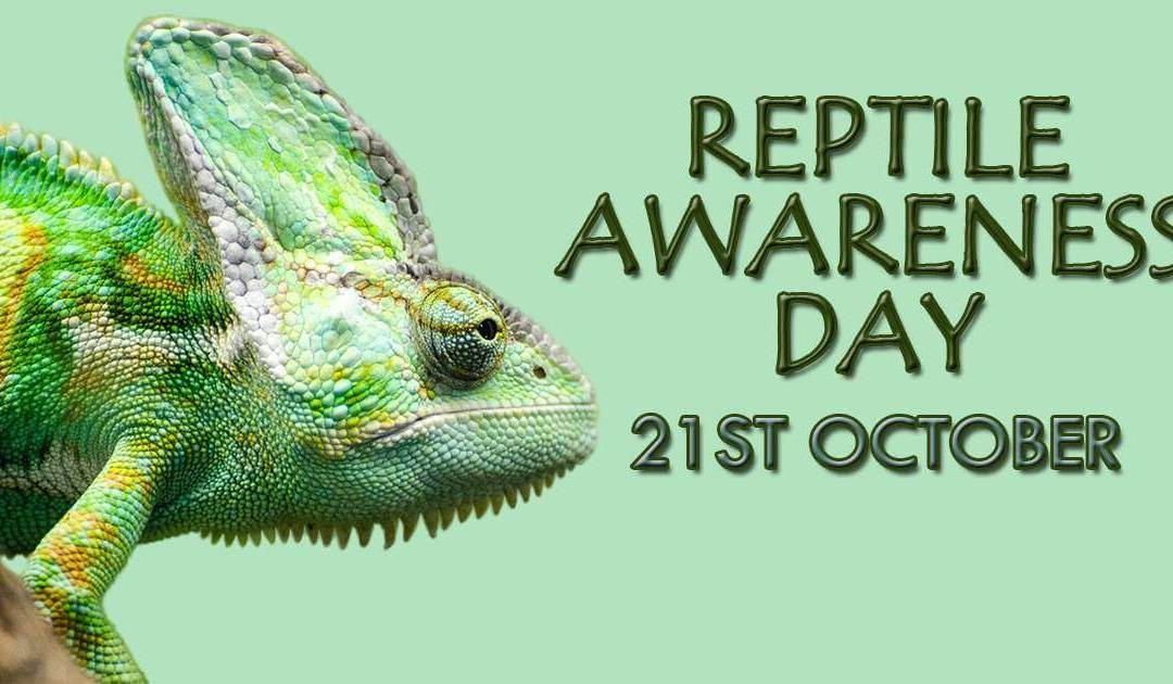 National Reptile Awareness Day – October 21, 2020