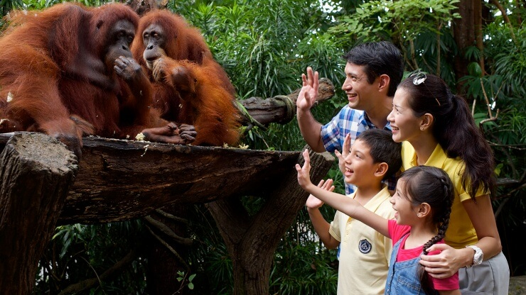 National Zoo Lovers Day – April 8, 2021