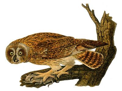 Owl Vintage Images