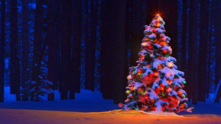 Christmas Tree Images HD