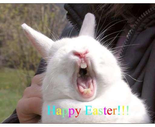 Easter 2019 Bunny Memes