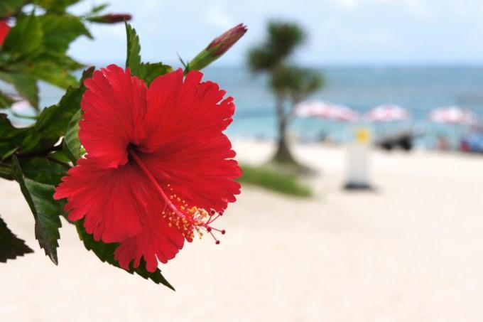 沖縄旅行計画
