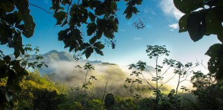A new conservation project is created in Costa Rica thanks to COVID-19