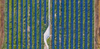 Pollinator-Friendly Solar Could be a Win-Win for Climate and Landowners, but Greenwashing is a Worry