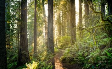 Best Type of Forest for CO2 Storage Depends on Location and Climate, Study Finds